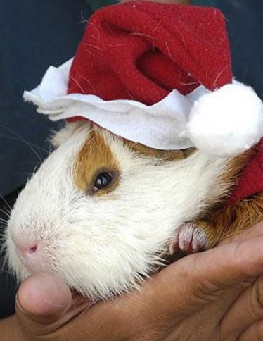 Top 10 Rodents Dressed As Santa