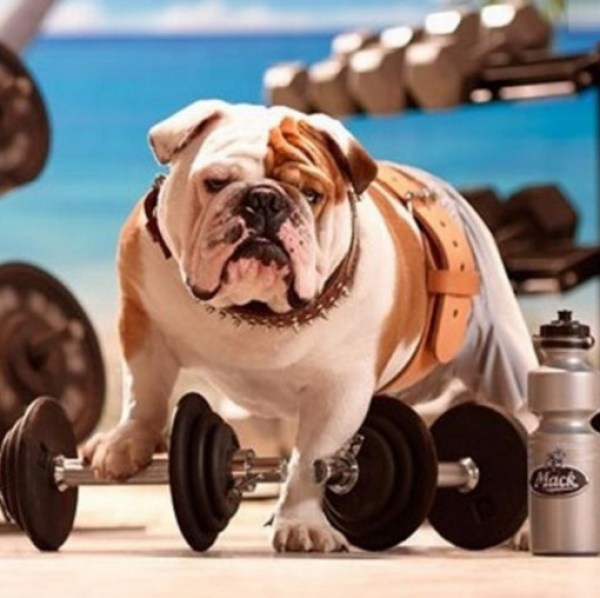Top 10 Weight Loss Journey Dogs At The Gym