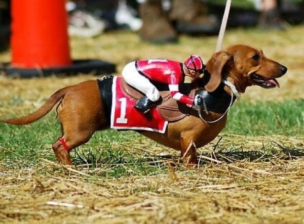 Top 10 Equestrian Dogs That Look Like Horses
