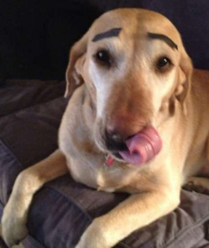 Top 10 Facially Expressive Dogs With Eyebrows