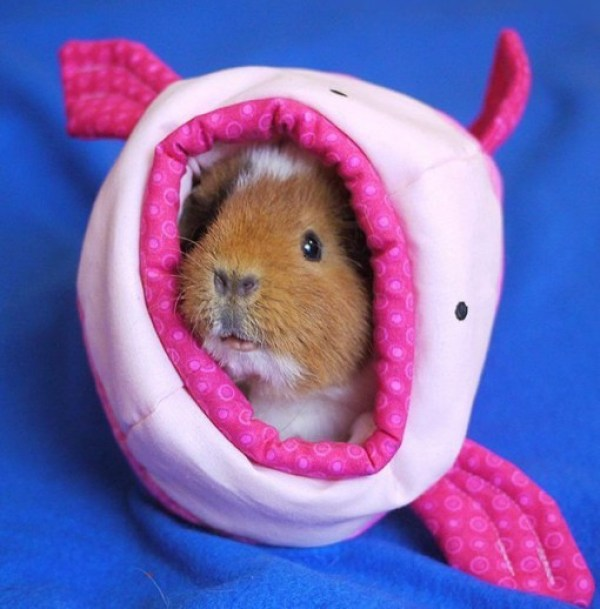 Blobfish Guinea pig House