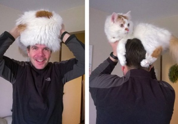 Top 10 Perching Cats On Heads