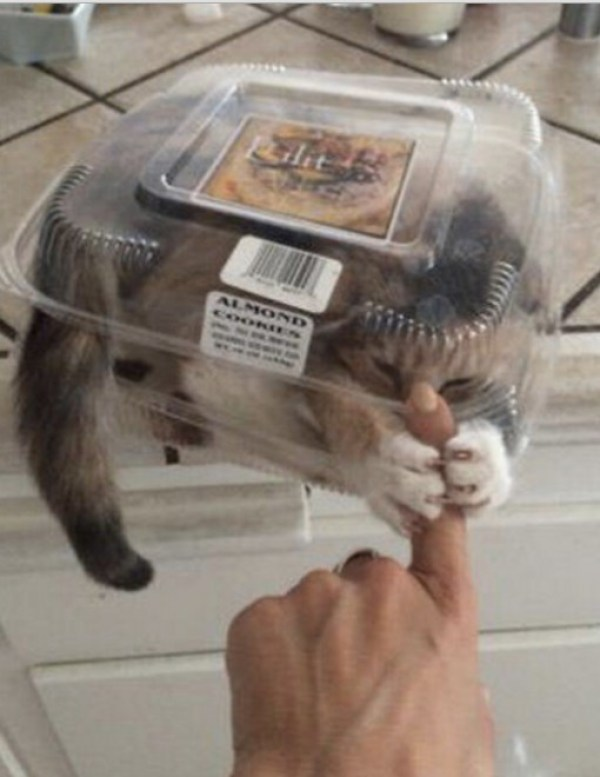 Cat in a Snack Pack