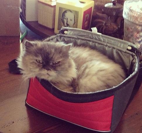 Cat in a Sandwich Box
