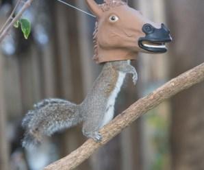 Top 10 Wonderful, Weird and Unusual Squirrel Feeders