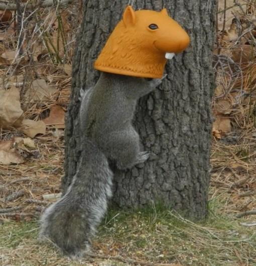 Squirrel Head Squirrel Feeder