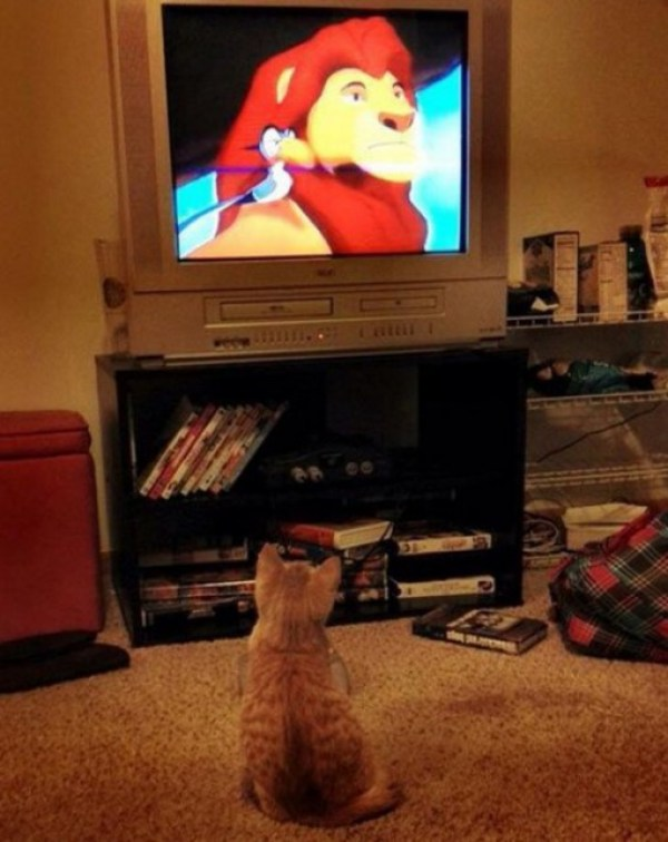 This Cat Loves Walt Disney
