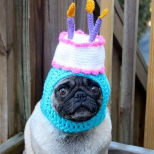 Top 10 Party Time Dogs Celebrating Birthdays