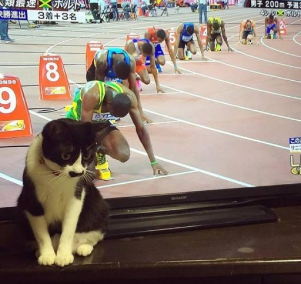 Top 10 Perfectly Timed Shots Of Cats