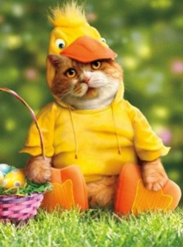 Cat Dressed As Easter Duck