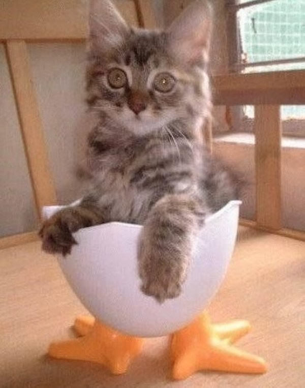 Cat Dressed As Easter Egg