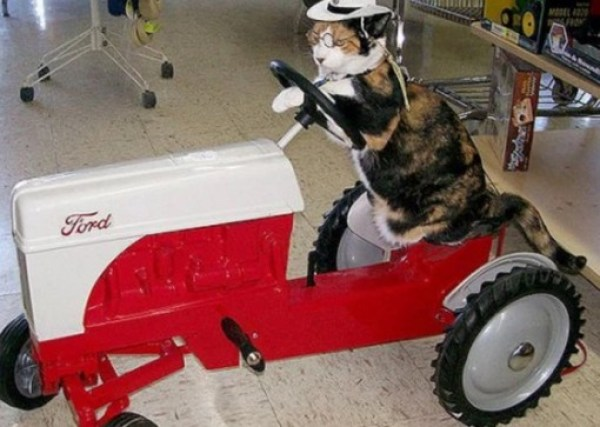 Cat Driving A Tractor