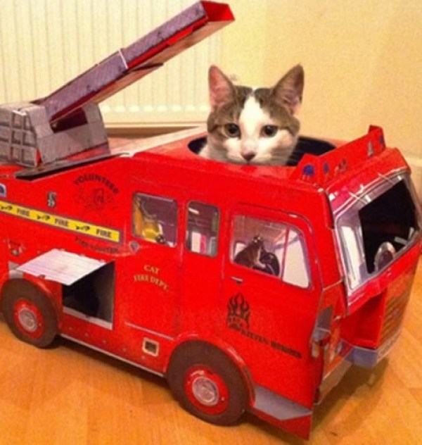 Cat Driving A Fire Engine