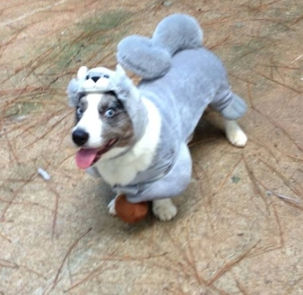 Dog Dressed As a Squirrel