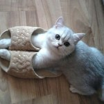 Top 10 Warm And Comfortable Cats In Slippers