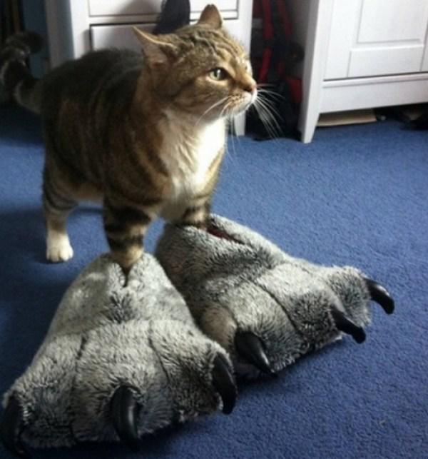 Cat Wearing Slippers