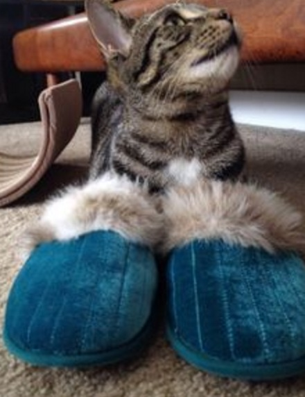 Cat Wearing Slippers