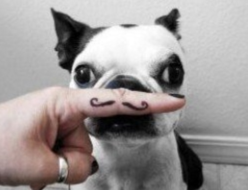 Dog With a Mustache