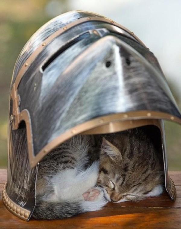 Cat Asleep Inside a Knights Helmet