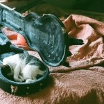 Top 10 Sleepy Cats Sleeping In Unusual Places
