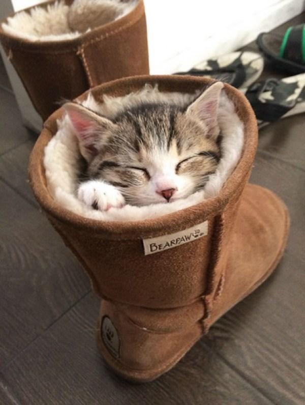 Cat Asleep Inside a Boot