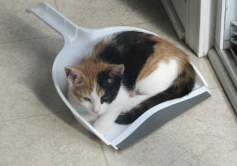 Cat Asleep Inside a Dustpan Scoop