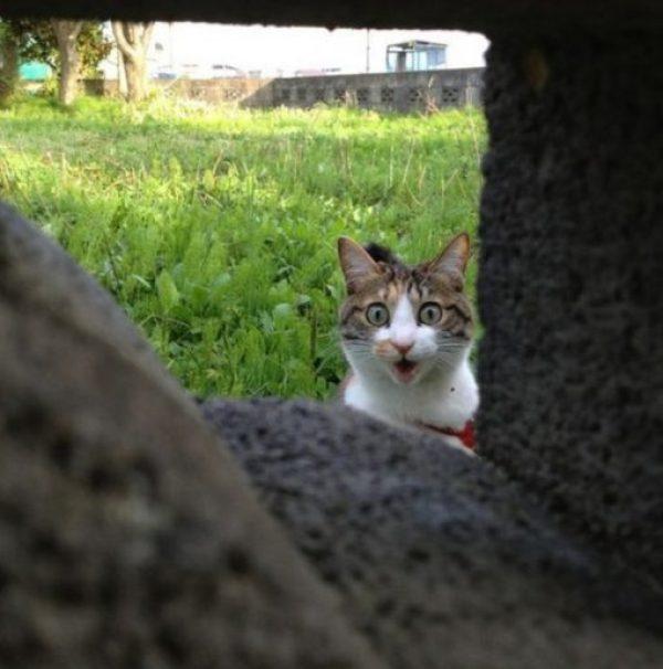 Cat Peeking Through a Brick