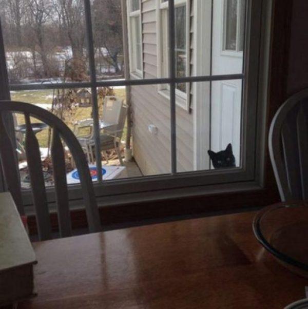 Cat Peeking Through a Window