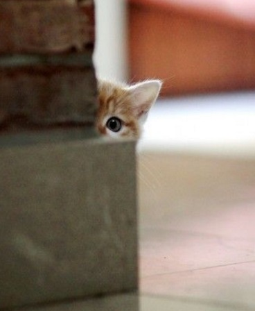 Cat Peeking Around a Corner