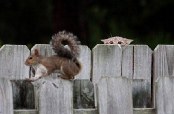 Cat Peeking Over A Fence