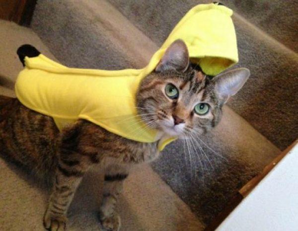 Cat Looks Like a Banana