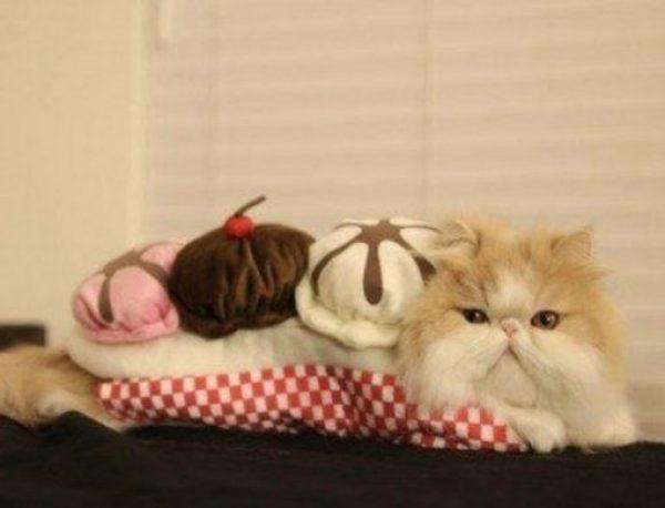 Cat Looks Like a Banana split