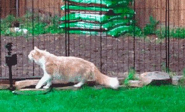 Cat Sniffing Water Sprinkler