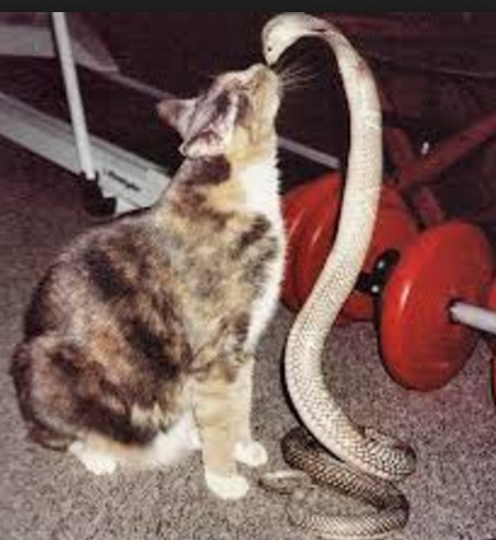 Cat Kissing Snake