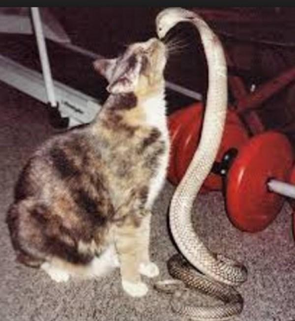 Cat Kissing Snake