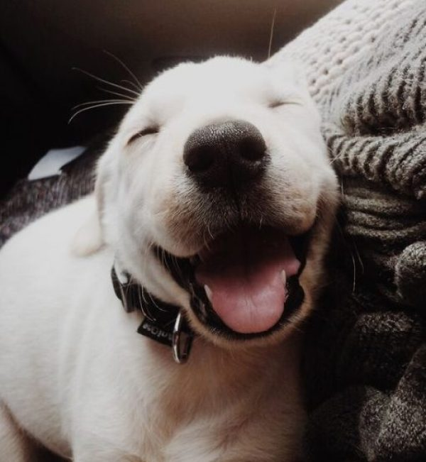Happy and Contented Dog