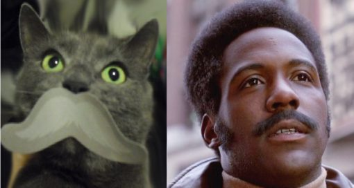 John Shaft Cat