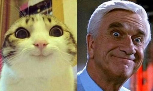 Frank Drebin Cat