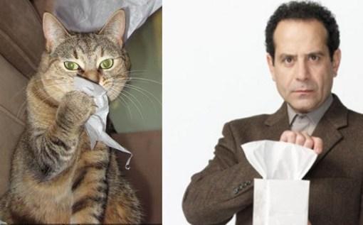 Adrian Monk Cat