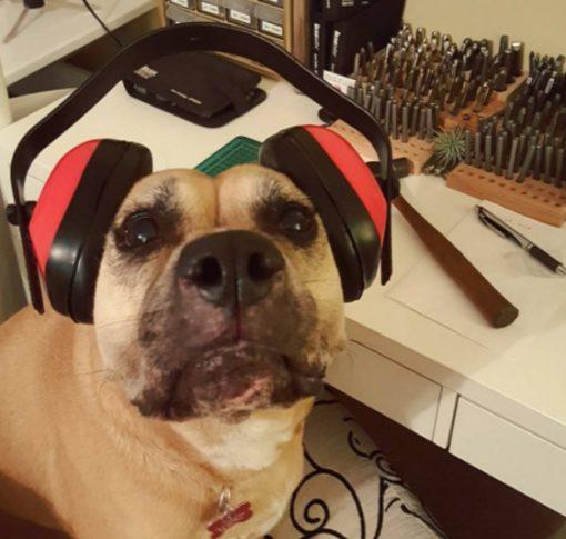 Dog Wearing Ear Protectors