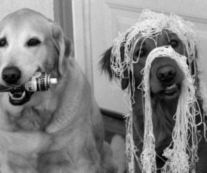 Top 10 Friendly Dogs With Terrible Friends