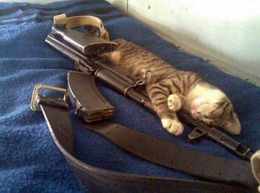 Army Cat With Gun