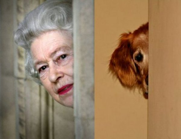 Dog and Queen Hiding Around The Corner