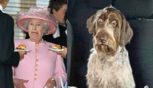Dog and Queen With a Shocked Look