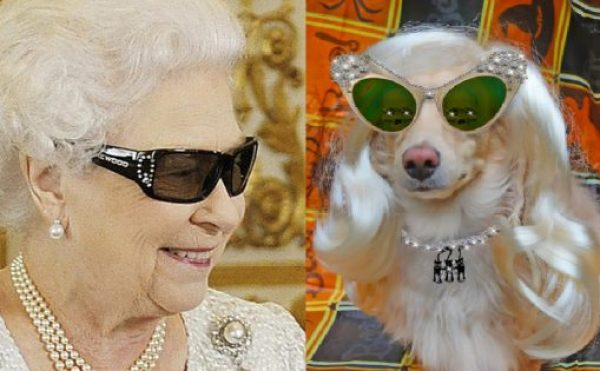 Dog and Queen Wearing Shades