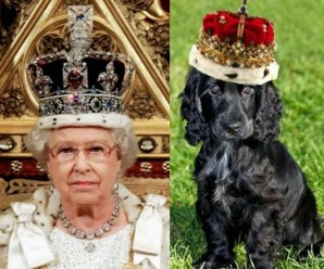 Top 10 Royal Dogs Who Look Like The Queen