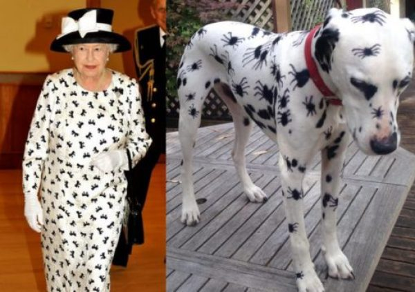 Dog and Queen Wearing Spots
