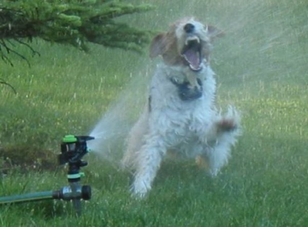 Cool Down Your Dog With a Spinkler