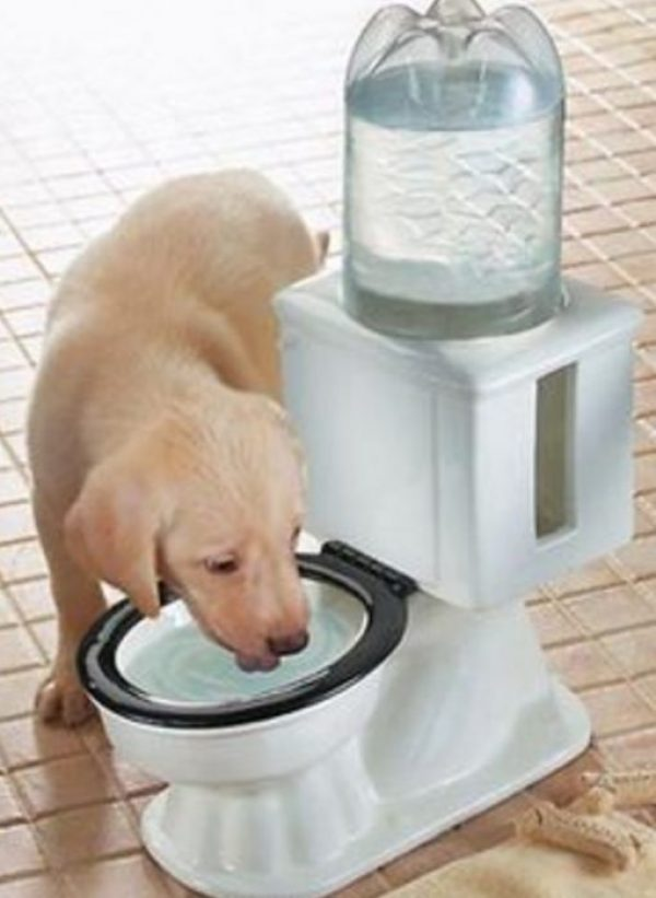 Cool Down Your Dog But Making Sure It Has Plenty of Water