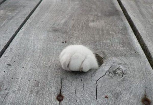Funny Cat Paw